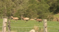 Highland deer running in scotland Stock Footage