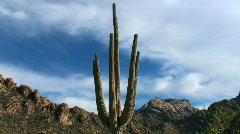 Saguaro time lapse - HD  - stock footage