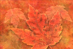Red Fall DV Stock Footage