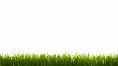 Grass in wind HD Stock Footage