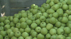 Granny smith apples into bin Stock Footage