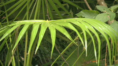 Tropical plant  Stock Footage