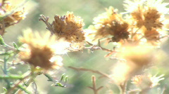 Flowers in the wind - HD  Stock Footage