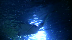 Sea Turtle is swimming at the water's surface - stock footage