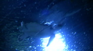 Stock Video Footage of Sea Turtle is swimming at the water's surface
