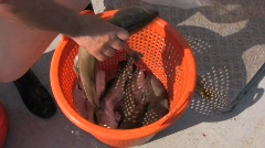 Fishing Stock Footage