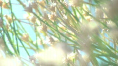 Wild flowers in the wind V3 - HD  Stock Footage