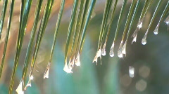 Water droplets on palm leaf - HD  Stock Footage