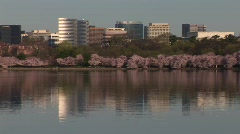 Crystal City, Virginia - Cherry Blossom Reflection Stock Footage