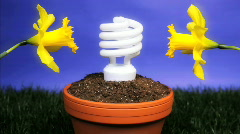 Energy saving light bulb planted Stock Footage