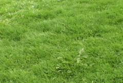 Grass Pienennä Arkistovideo