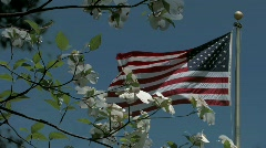 American Flag flying behind spring dogwood blossoms Stock Footage