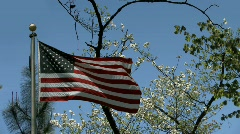 American Flag flying in front of spring trees and blossoms Stock Footage