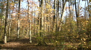 Beautiful autumn scenic of a sunny walking trail (High Definition) Stock Footage