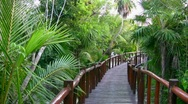 Walking path in a mangrove Stock Footage