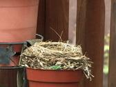 Bird's Nest 461 Stock Footage