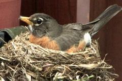 Bird's Nest 464 Stock Footage
