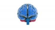 Brain model Stock Footage