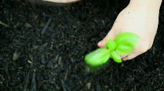 Planting - An Overhead View of a Child Planting a Seedling Stock Footage