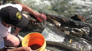 Stock Video Footage of prospector, miner, sluice box