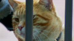 Close-up of Ginger Cat Enjoying a Scratch From a Child Stock Footage