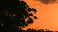 Sunset with tree in foreground Stock Footage