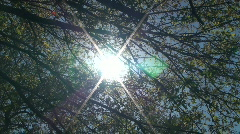 Lens Flair Through Oak Tree Branches Stock Footage