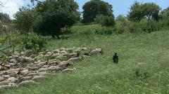 Stock Video Footage of Sheep, goats, shepherd