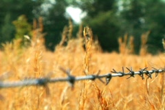 Barb Wire and Weeds in Rural Tennessee Stock Footage