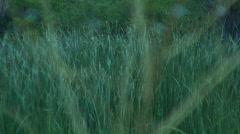 Oasis pond vegetation focal change Stock Footage
