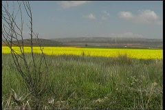 Landscape in Andalusia Stock Footage