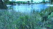 Desert oasis in the spring - 3 Stock Footage