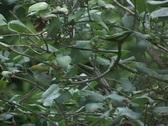 Little bird in a tree Stock Footage