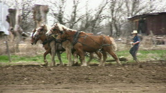 Old Fashion Farming By Amish Farmers - stock footage