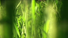 In the grass - HD  Stock Footage
