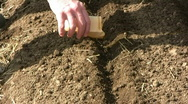 Sowing seeds Stock Footage