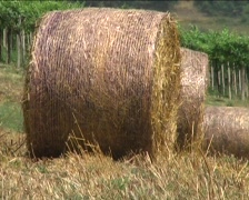 Stock Video Footage of Agricultural