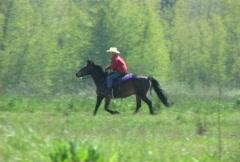 Horseback Riding - stock footage