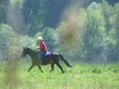 Stock Video Footage of Horseback Riding