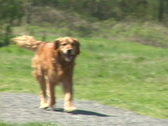 Dogs Running Towards Camera Series Stock Footage