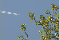 Jet Contrails with Trees Stock Footage