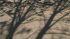 Shadow trees  Stock Footage