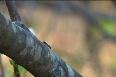 Two Caterpillars - stock footage