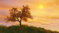 Autumn tree at golden sunset Stock Footage