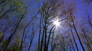 Sun through trees Stock Footage