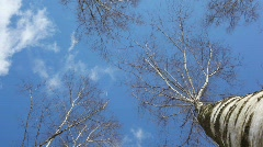 Treetop in blue sky Stock Footage