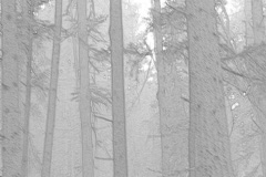 Forest Pen Drawing Stock Footage