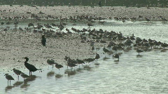 Birds on Sanible Island Florida Stock Footage