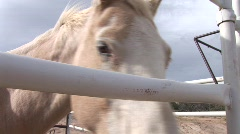 funny horse puts nose through fence dragoon mountains 6th in series - stock footage