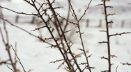 Swaying brush in the snow Stock Footage